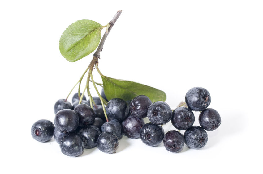 Black chokeberry - aronia on a white background Aronia Aronia Berries Aroniaberries Blueberry Chokeberry Close-up Food Food And Drink Freshness Fruit Healthy Eating Leaf No People Studio Shot White Background