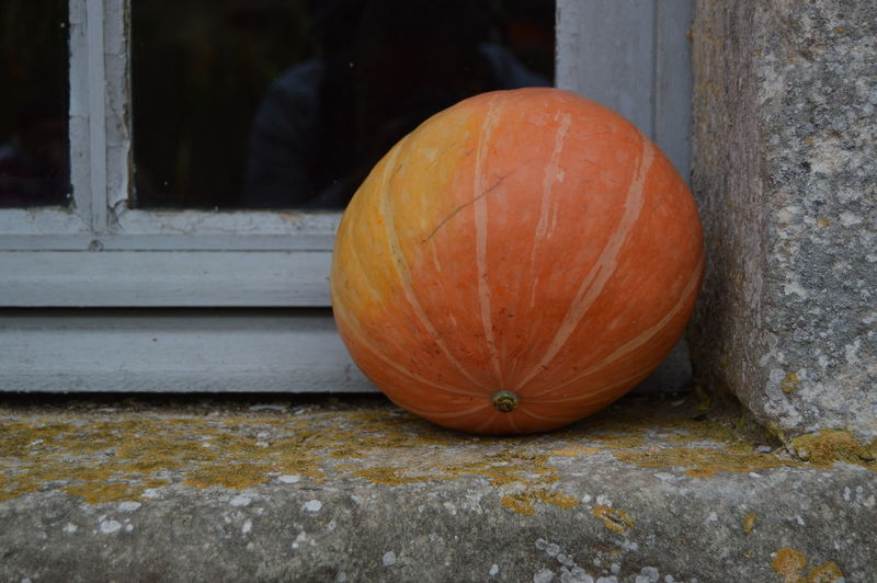 Close-up of pumpkins on stone wall during halloween