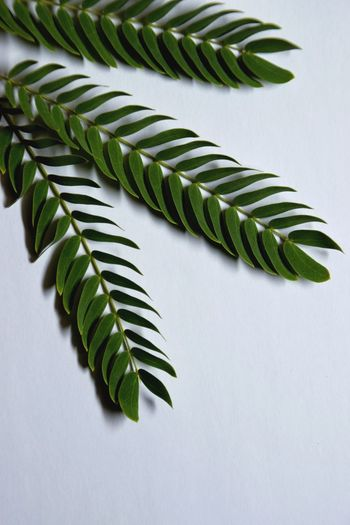 High angle view of fern leaves on table