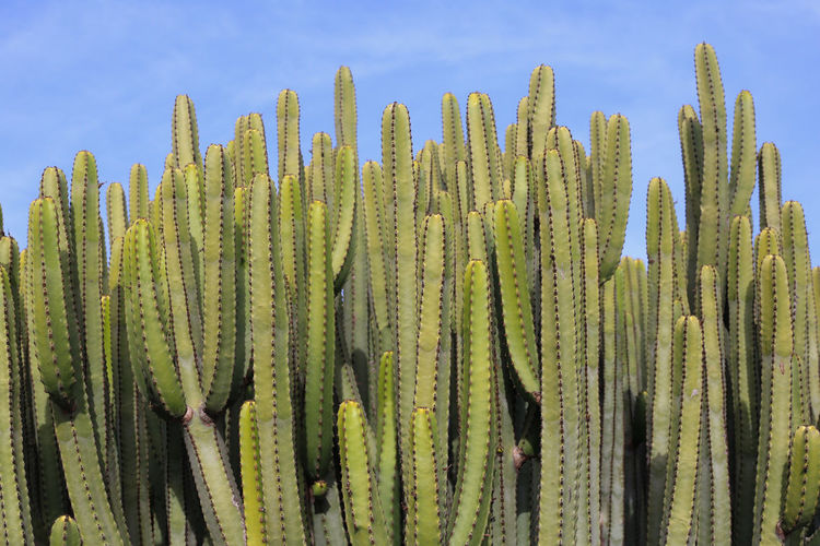 Close-up of cactus against sky