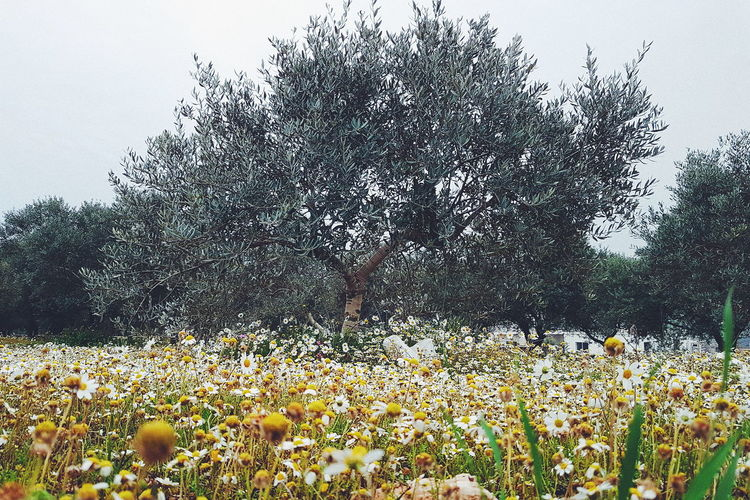 Perspectives On Nature Lost In The Landscape Landscape Hiking Clouds And Sky Tree Lebanon In Photos Freshness Scenics Lebanese_nature Getty Images Getty X EyeEm Rural Scene Lebanese_talents Lebanon Today Mountain Arid Climate Olive Tree Blue Sky