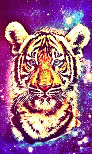 """- """"Eveyone Needs A Dog To Adore Him, And A Tiger To Bring Him Back To Reality."""" Wisedom"""