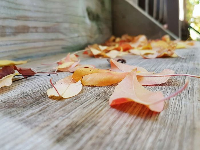 Close-Up Of Autumn Leaves In Row
