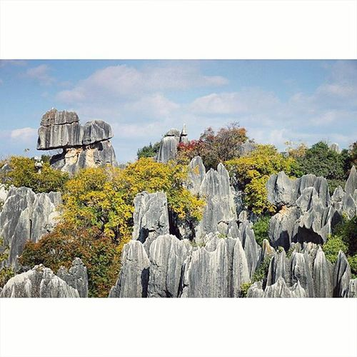 Stone Forest (石林) of Yunnan! Fun facts: This limestone formation used to be under the sea for appx 270 million years since the Permian era (some time after the Jurassic era). Sani legend has it that a beautiful girl of the Yi people was born here and named Ashima (阿诗玛). Despite many suitors, she fell in love with a man she was forbidden to marry and for that, she turned into one of the stone in the forest. They now call the girls there Ashima 😂 Travel YunnanTibetSeries Wanderlust Exclusive_shots_2015 Photooftheday Landscape Nature Instadaily Unknownstagram Liveauthentic Yourshot
