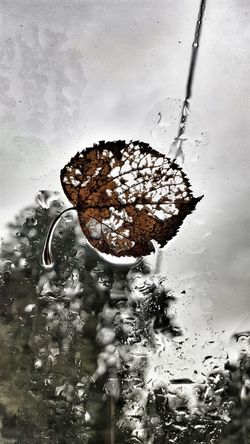 The Autumn Effect Leaf Photography Leaf 🍂 Beauty In Decay Rainy Days Raindrops Rainy Day Rain Beauty In Death Autumns Reap