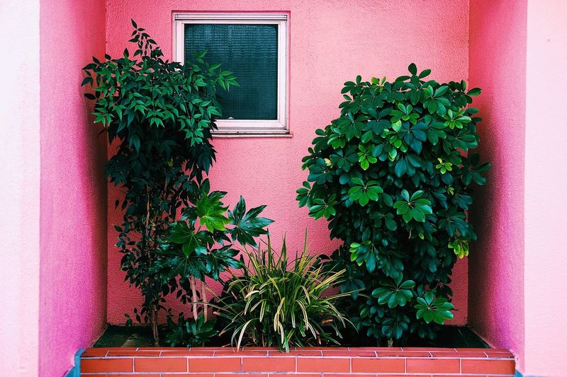 Plants growing outside house