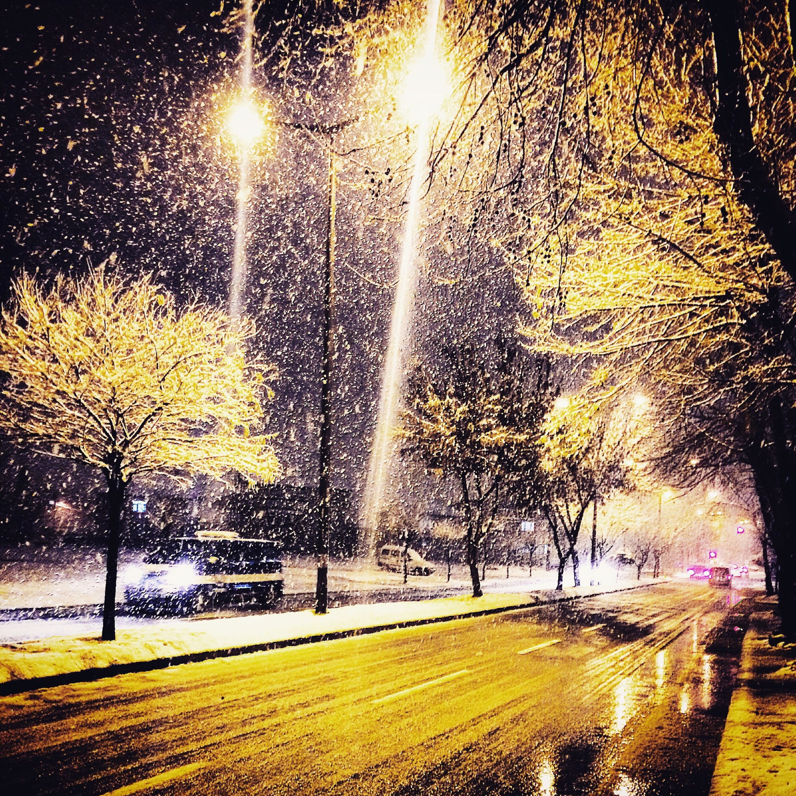 season, tree, snow, winter, cold temperature, weather, bare tree, street, street light, road, illuminated, nature, branch, night, park - man made space, transportation, sun, car, tranquility, covering