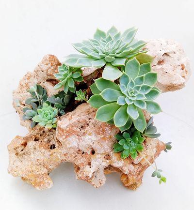 Herbal Medicine Herb Alternative Medicine Oregano Leaf Healthcare And Medicine Close-up Plant Green Color