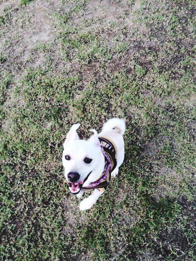 I Feel Free I Feel FREEDOM Yahoo Happydog 😻🐹 Mydog♡