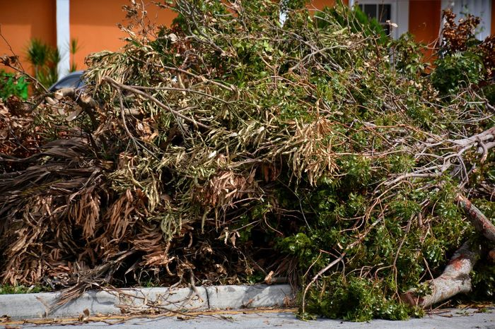 Aftermath of Hurricane Irma 2017 South Florida Hurricane Irma 2017 Storm Debris Outdoors Tree Downed Trees Hurricane Season  TreePorn Downed Tree Hurricane Damage Full Frame Aftermath Fallen Tree Hurricane No People Debris Hurricane Season  Piles Of Wood Roadside Damages