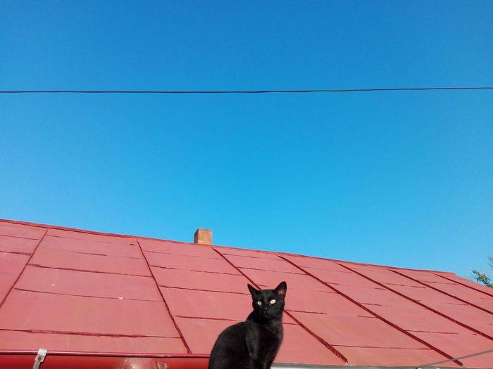 Cat looking away against blue sky
