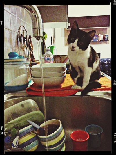 Macchia is learning to wash the dishes ....