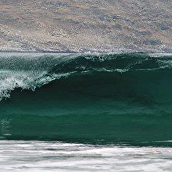 Una Orca En La Cresta De La Ola ...