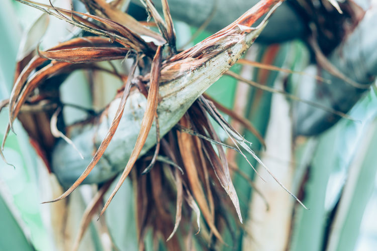 Plant Close-up Selective Focus Day Focus On Foreground No People Nature Dry Growth Plant Part Tree Outdoors Leaf Beauty In Nature Dead Plant Branch Brown Twig Vulnerability  Dried Plant Leaves Wilted Plant Dried