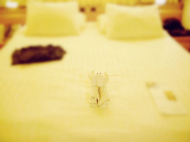 Indoors  Stateroom Cruise Ship Koduckgirl Cruise 2013 Towel Animal