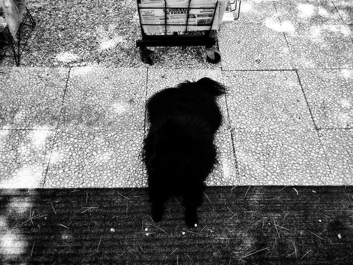 B&w Street Photography Blackandwhite Biancoenero Nerogiacomelli