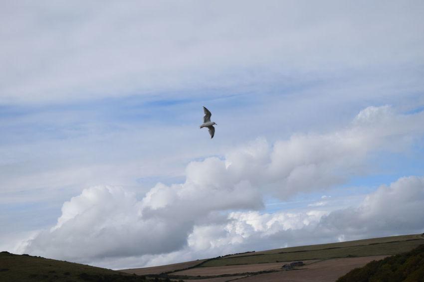 Bird Seagull