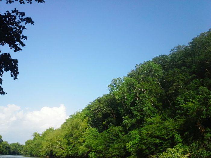 Altavista,VA English Park Trees Skies Clouds David Tupponce Tupponce Photography Vivid Colors Blue Green White Summertime