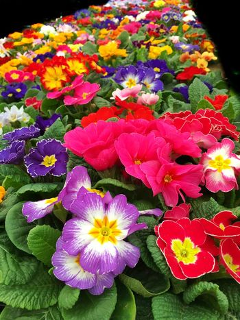Flower Fragility Freshness Beauty In Nature Nature Petal Flower Head Growth Blooming Plant Outdoors No People Close-up Day