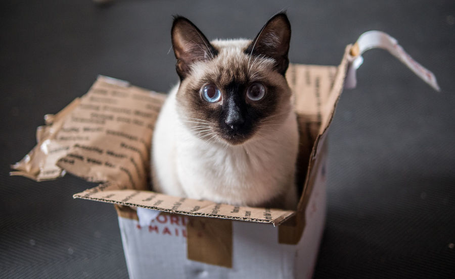 Priority mail Alertness Animal Eye Animal Head  Box Cat Close-up Creative Delivery Domestic Cat Feline Focus On Foreground Fun Kitty Mail Mammal No People Pet Pets Portrait Purrfect Relaxation Selective Focus Staring Trap Whisker Place Of Heart