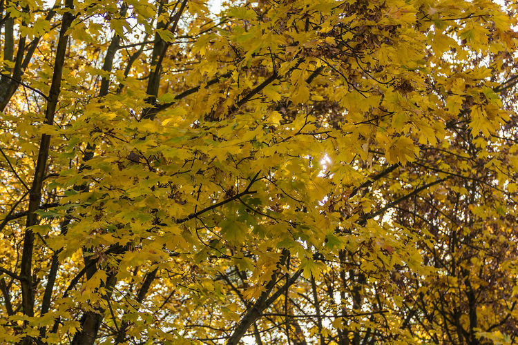Autumn Beauty In Nature Branch Change Day Freshness Growth Leaf Low Angle View Nature No People Outdoors Tree Yellow