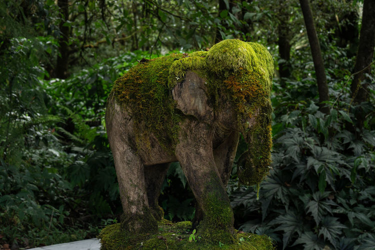 Statue amidst trees in forest