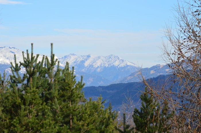Austria Austria Mountains Nature_collection Snow ❄ Tree_collection