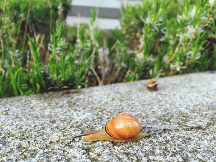 snail 1 and