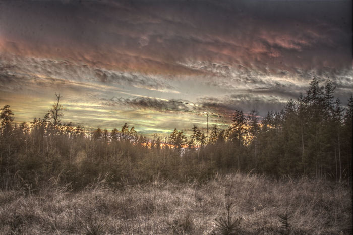 After The Rain Cloudy HDR HDR Collection Pastel Power Scenics Sunset Tree And Sky Tree Sunset Wood Forest Landscape With Whitewall The Great Outdoors - 2016 EyeEm Awards The Great Outdoors With Adobe