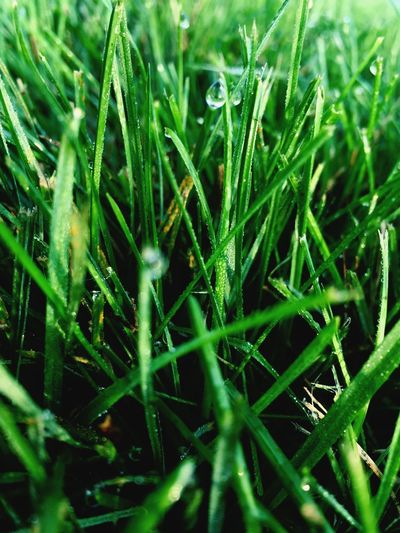 Backgrounds Beauty In Nature Blade Of Grass Close-up Day Detail Dew Field Focus On Foreground Fragility Full Frame Grass Grassy Green Green Color Growing Growth Lush Foliage Nature No People Outdoors Plant Selective Focus Tranquility