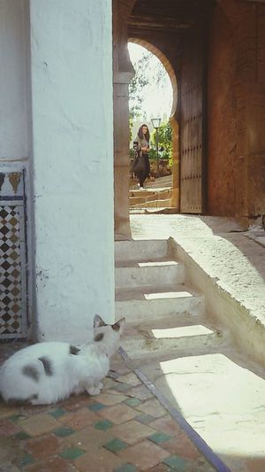 Animal Themes One Animal One Person Watching Les Oudayas Eyeemvision WeekOnEyeEm EyeEm Gallery EyeEmNewHere Morocco Doors
