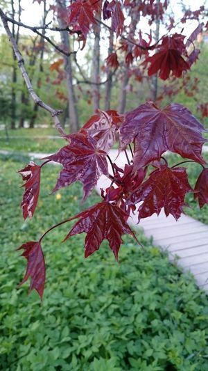 Beauty In Nature Nature Day Botanical Garden Garden Plant Aptekarsky Kitchen Garden Sky