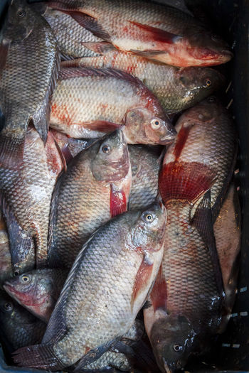 High angle view of tilapia fish for sale at fish market
