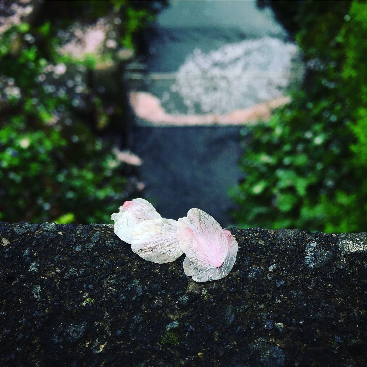 Close-Up Of Petals Against Blurred Plants