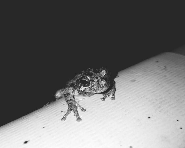 Frog Treefrog Animal Wildlife One Animal Nature Outdoors Close-up Pool Live For The Story BYOPaper! The Street Photographer - 2017 EyeEm Awards The Great Outdoors - 2017 EyeEm Awards The Photojournalist - 2017 EyeEm Awards EyeEmNewHere