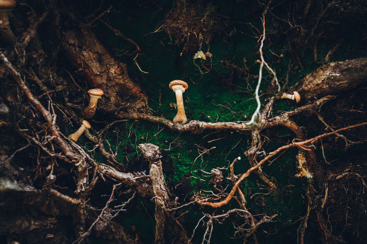 Mushrooms and roots on field
