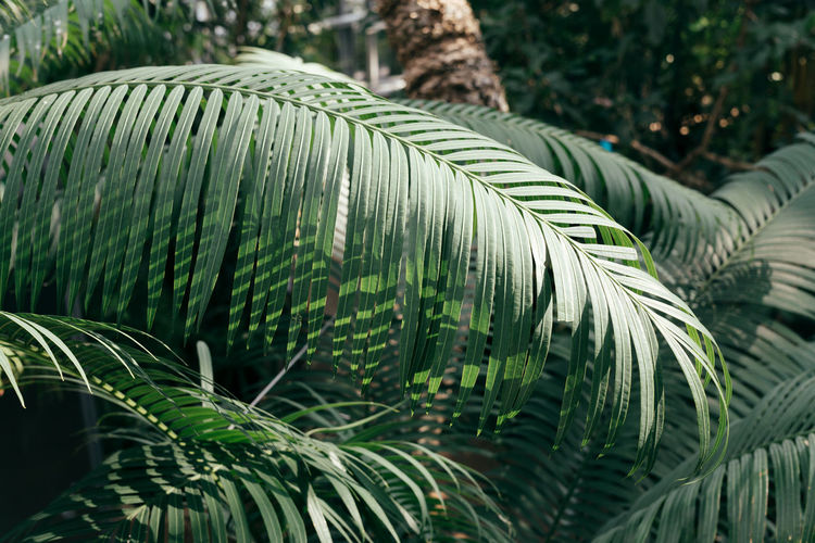 Beauty In Nature Botanical Botanical Gardens Botany Close-up Day Green Green Color Growth Leaf Nature No People Outdoors Palm Tree Plant Tree