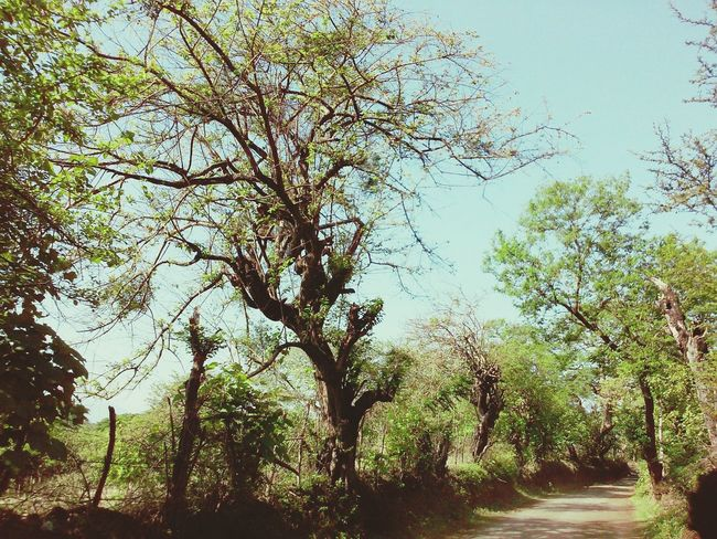 Nature Enjoying Life