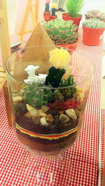 Terrarium designs by November Culture Check This Out