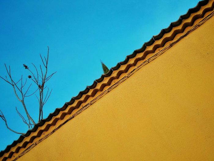 Bicolor lines Blue Blue Sky Yellow Tree LINE Diagonal Azul Cielo Azul Amarillo Linea Diagonal Lines синее синее небо árbol Wall Yellow Wall Pared желтый стена линия диагональ