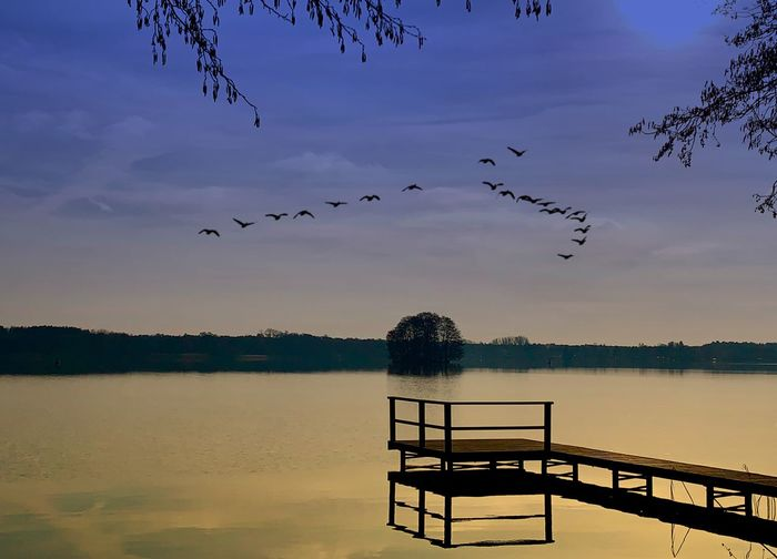 Water Sky Bird Lake Vertebrate Animal Beauty In Nature Nature Animal Themes Tranquility Tranquil Scene Animal Wildlife Group Of Animals Animals In The Wild Large Group Of Animals Scenics - Nature Reflection Cloud - Sky Flying No People