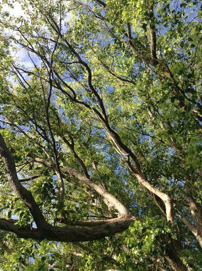 Trees Nature Clouds Retreat Rain
