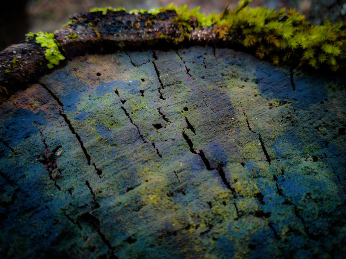 Close-up of rusty metal on tree trunk