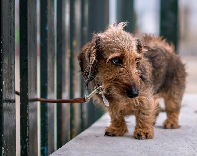 Close-up of dog standing by fence