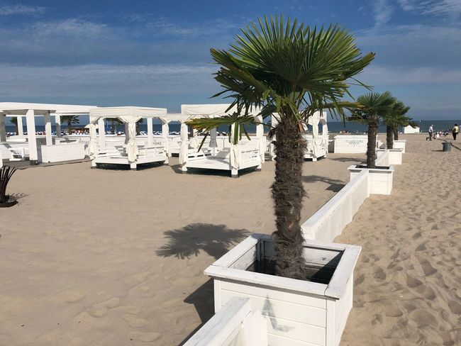 Summertime Beachphotography Summer Baltic Sea Warnemünde IPhone X Photography IPhone X IPhone X Palm Sealife Tree Sky Plant Nature Beach Land Day Water Built Structure Tropical Climate Sand Sunlight Cloud - Sky Architecture Sea Palm Tree Tranquil Scene No People Tranquility Outdoors