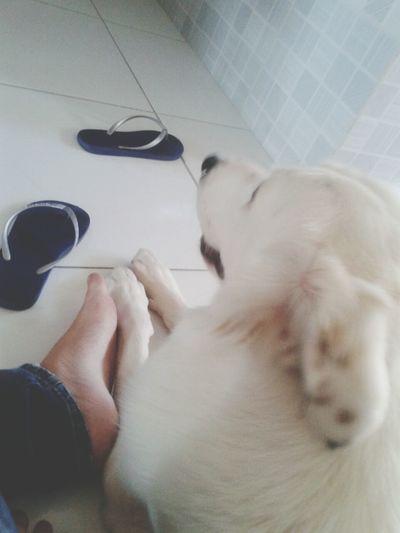 My dog :) First Eyeem Photo