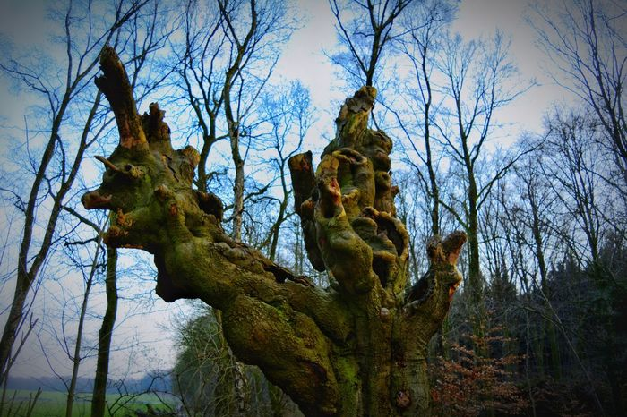 Showcase March Nikonphotography Eyem Gallery Hanging Out Nikon D5200 Light And Shadow Eye4photography  Walkingway Taking Photos Nature On Your Doorstep Tree Trunk Color Photography Natural Edit