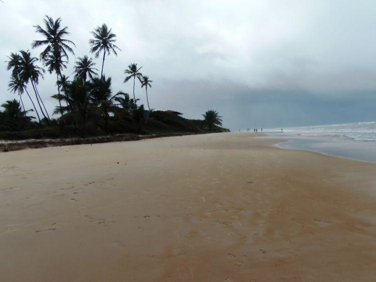 Belas paisagens Maceió Beach Beautiful Beauty In Nature Coconut Trees Maceiobeach Maceió Monkeys Nature Photography Photography Places Sky