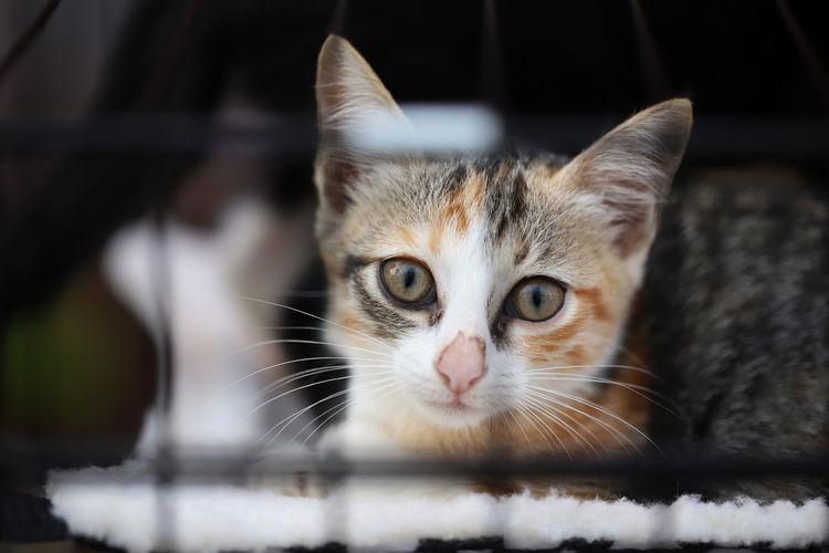 Little kitten in a cage in an animal shelter. Cats in a veterinary clinic Domestic Pets Mammal Domestic Animals Domestic Cat Cat One Animal Feline Vertebrate Whisker Portrait Looking At Camera Animal Body Part Close-up No People Selective Focus Animal Eye Kitten Tabby Cage Veterinary Clinic Animal Shelter