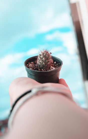Sky blue very happy 😁😁😁 Human Hand Holding Close-up Sky Potted Plant Houseplant Bonsai Tree Window Box Window Sill Petunia Pot Growing Blooming Cactus Pottery Earthenware Saguaro Cactus Clay Spiky Plant Spiked Molding A Shape Prickly Pear Cactus Flower Pot Succulent Plant Plant Life Thorn Barrel Cactus Flower Head